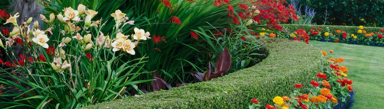Levy's Lawns and Landscaping