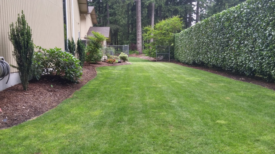 5 Easy Tips for Winterizing your Lawn in the Pacific Northwest