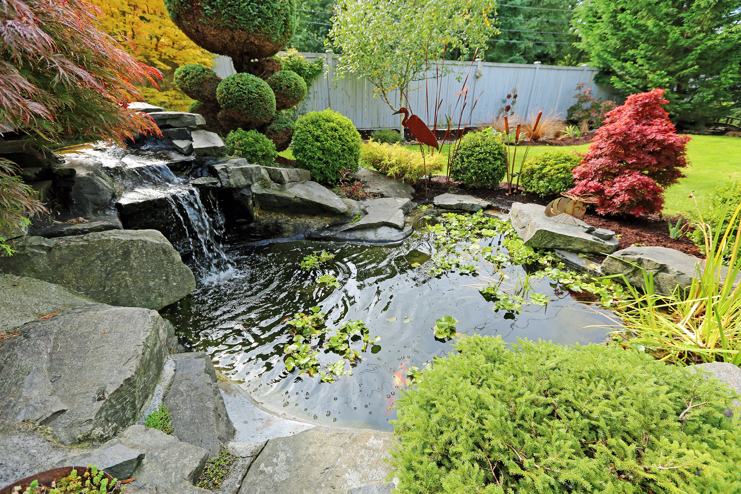 Tropical landscape design in backyard. View of small pond, trimmed bushes and small waterfall
