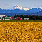 Three Easy Garden Designs for your Pacific Northwest Garden