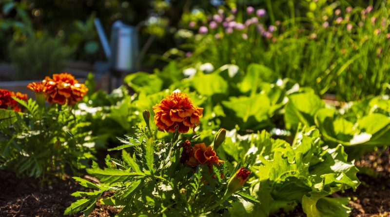 planting edible gardens in the pacific northwest