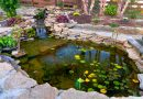 Choosing Fish for Your Outdoor Pond