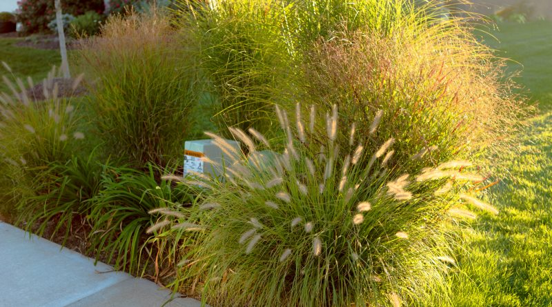 Neighborhood beautification, hiding underground powerline and telecommunication boxes with giant ornamental grasses in the neighborhood