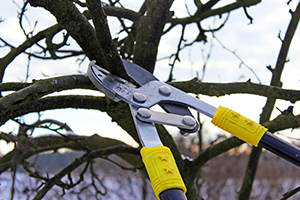 pruning basics by levy's lawns and landscaping washington