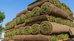 Sod is an easy way to get a beautiful lawn quickly.