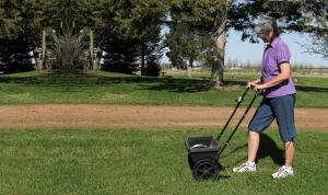 Fertilize your lawn at regular intervals