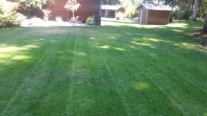 Another beautiful lawn by Levys Lawns and Landscaping